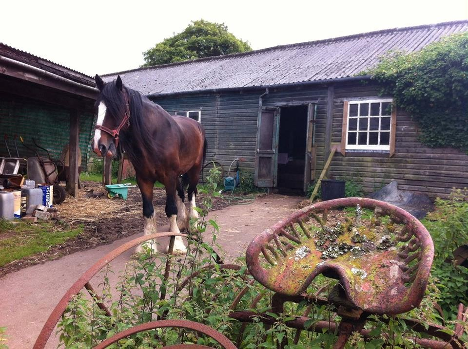 Shire Horse Farm and Carriage Museum